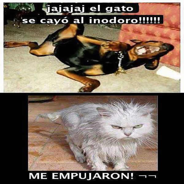 Imagenes Graciosas De Animales En Facebook Mundo Imagenes