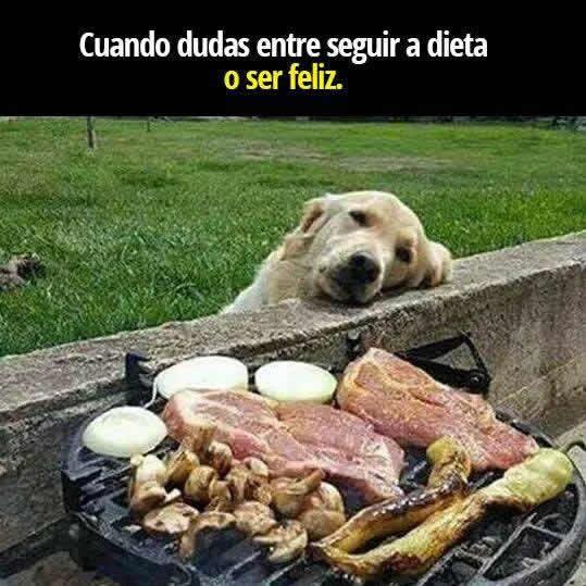 Imagenes De Perros Graciosas Con Frases Divertidas 2018 Mundo