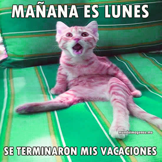 Memes Se Terminaron Las Vacaciones Mundo Imagenes Frases