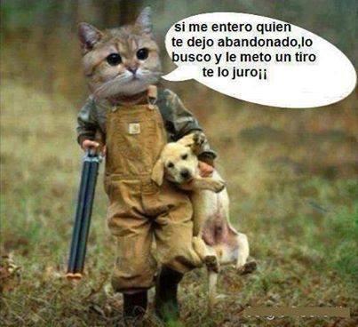 Chistes Cortos Bonitas De Humor Mundo Imagenes Frases Actuales