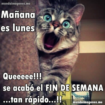 Frases Con Imagenes De Mañana Es Lunes Chistosas