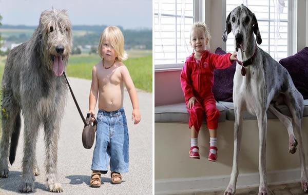 Fotos Tiernas De Ninos Con Perros Grandes Bello