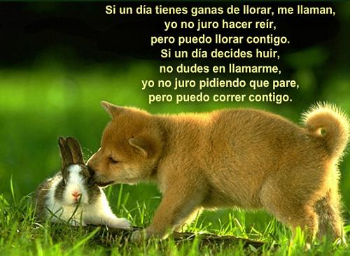 Frases De Animales Perros