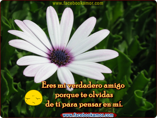 Imagenes Bonitas De Amistad Para Facebook