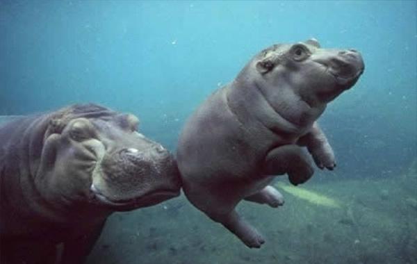 Imagenes Curiosas De Animales Raras Y Graciosas