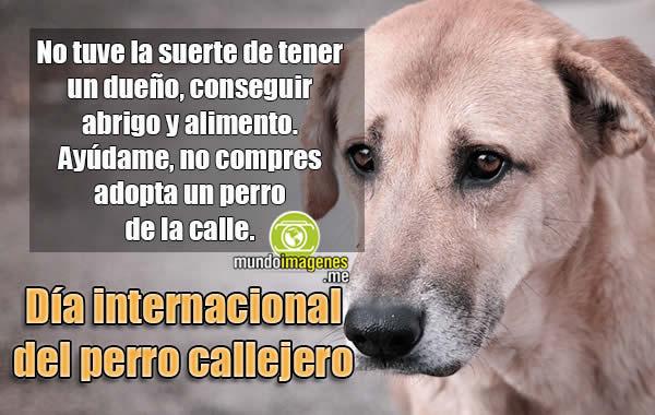 Imagenes Dia Del Perro Callejero Frases Emotivas Reflexiones