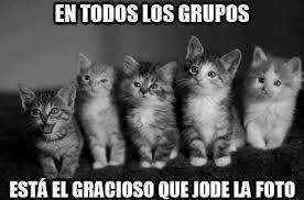 Imagenes Graciosas De Tiernos Gatitos