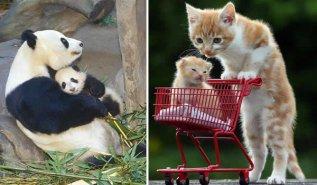 Fotos Animales Graciosas Actuan Como Humanos
