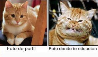 Bonitas Imagenes De La Felicidad57